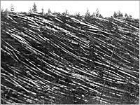 Тунгусский метеорит. Что говорят свидетели