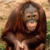 Люди-обезьяны