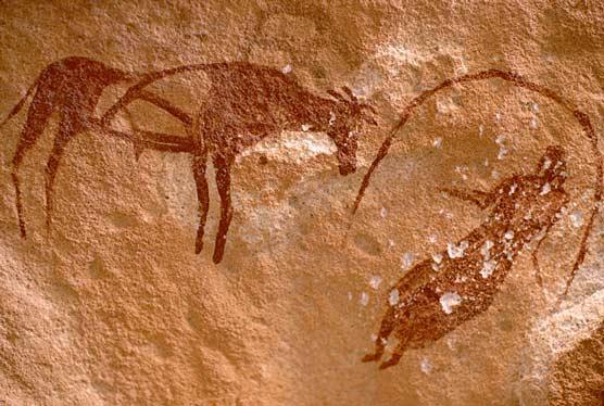Алжирская женщина и бык