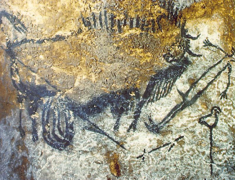 Бизон нападающий на человека