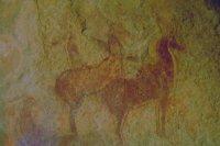 Алжир, верблюды