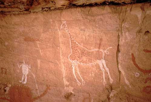 Жираф и человек